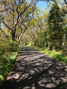 A sun dappled road near Newtown Creek