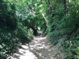Marathon 35, climbing up onto the Tennyson Trail