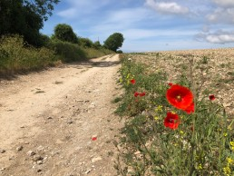 Marathon 35, Poppies on the Tennyson Trail